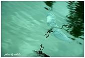 綠世界:DSC_5543.jpg