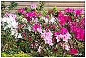 中庭裏的花開了!!:04.jpg