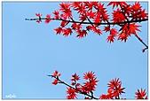台北奧萬大楓紅了:10.jpg