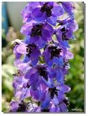 2011台北花卉展.幸福青鳥:P1000599.jpg