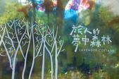 新社(生態溪、薰衣草花園):_DSC6286.jpg
