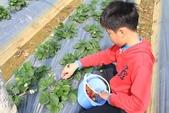 102鄉居生活:二崙採草莓 (3).JPG