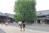 2014京阪神:西本願寺的大樹.JPG