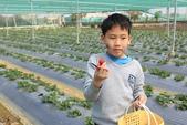 102鄉居生活:二崙採草莓 (4).JPG