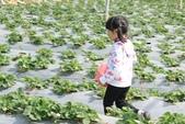 102鄉居生活:二崙採草莓 (5).JPG
