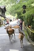 2014京阪神:2014奈良 (16).JPG