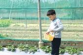 102鄉居生活:二崙採草莓 (7).JPG