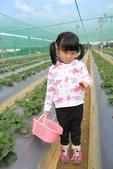 102鄉居生活:二崙採草莓 (8).JPG