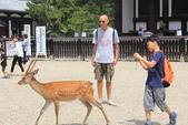 2014京阪神:2014奈良 (30).JPG