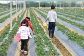 102鄉居生活:二崙採草莓 (1).JPG