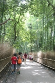 2014京阪神:嵐山 (13).JPG