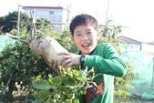 104鄉居生活:拔蘿蔔 (1).JPG