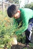 104鄉居生活:拔蘿蔔 (5).JPG