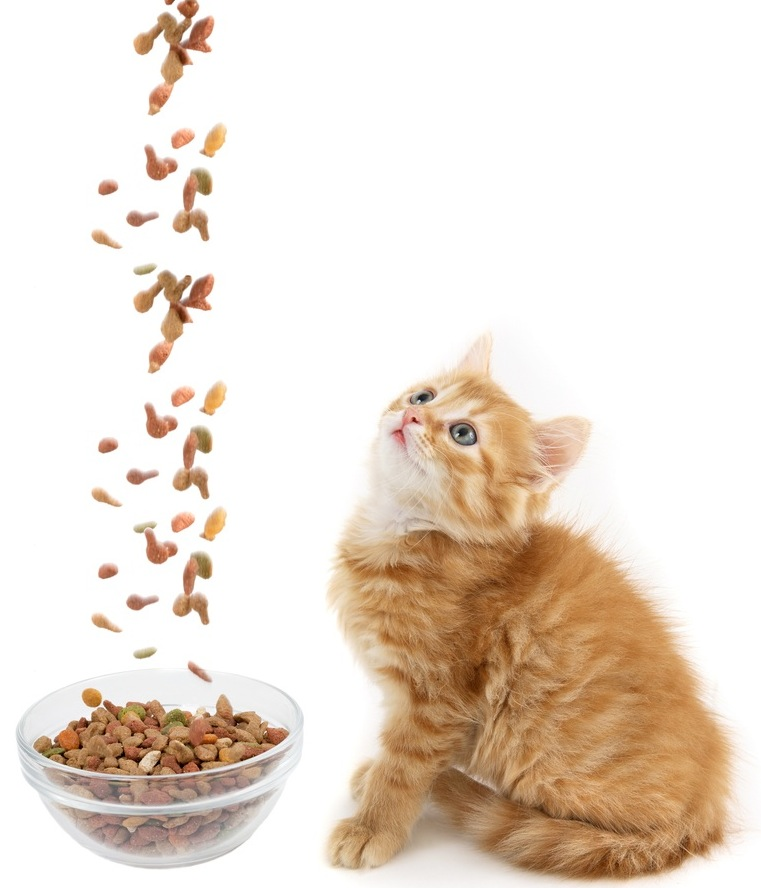 寵物展主要:Kitten and dry food shutterstock_74715544.jpg