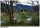20081229南庄:向天湖-湖旁一景.jpg