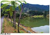 20081229南庄:向天湖-環湖步道一景.jpg