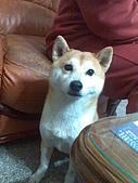 宜蘭:我是忠狗