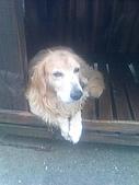 黃金小犬:魯魯的爸爸