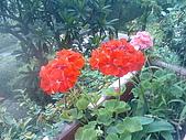 月光森林:朱紅花朵