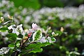 微距之花卉世界:DSC_5653.JPG