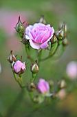 微距之花卉世界:DSC_5690.JPG