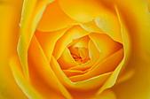微距之花卉世界:DSC_5517.JPG