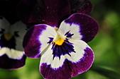 微距之花卉世界:DSC_5541.JPG