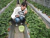 20080126 內湖草莓:20080126 內湖草莓