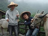 牛鈴之聲:圖01-出身農家的《牛鈴之聲》導演李忠烈,力搏台灣水牛.jpg