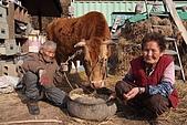 牛鈴之聲:3月23日_海鵬圖02-《牛鈴之聲》中老農夫婦和老牛「三人」