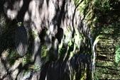 20141101台北王小姐太平山/翠峰湖/山毛櫸步道一日遊:DSC_0190.JPG
