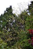 20120405太平山亂亂拍:DSC_2469.jpg