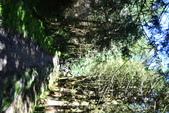20141101台北王小姐太平山/翠峰湖/山毛櫸步道一日遊:DSC_0194.JPG