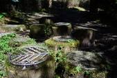 20141101台北王小姐太平山/翠峰湖/山毛櫸步道一日遊:DSC_0184.JPG