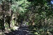 20141101台北王小姐太平山/翠峰湖/山毛櫸步道一日遊:DSC_0187.JPG