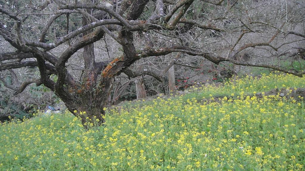 植物生態:DSC01238.JPG