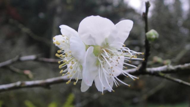 植物生態:DSC08249.JPG