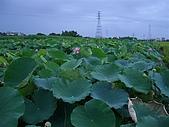 20050614台南白河花花草草集:CIMG1337