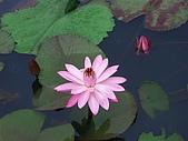 20050614台南白河花花草草集:CIMG1338