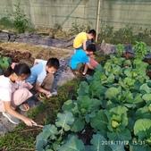 108-1綠園照片:IMG_20191112_153144.jpg