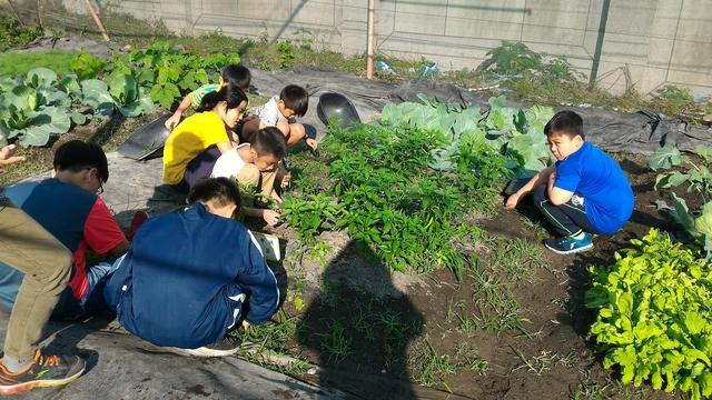 107-1大新綠園:P_20181122_145358.jpg
