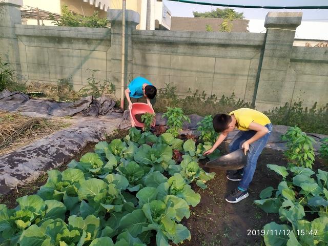 108-1綠園照片:IMG_20191112_154753.jpg