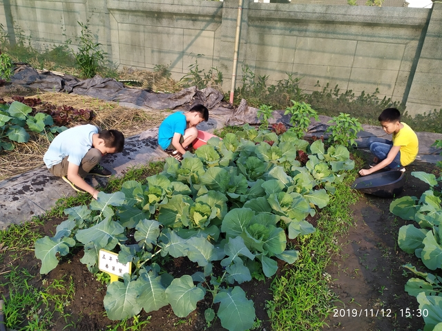 108-1綠園照片:IMG_20191112_153033.jpg