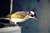 鳥類:DSCN1266_副本.jpg