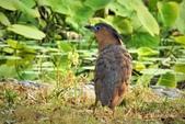鳥類:DSCN4025.JPG