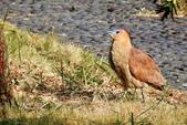 鳥類:DSCN4050.JPG