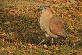 鳥類:DSCN4114.JPG