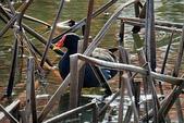 紅冠水雞:DSCN9479.JPG