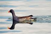 鳥類:DSCN1244_副本.jpg