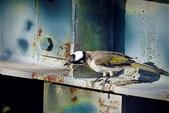 鳥類:DSCN1267_副本.jpg